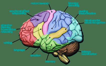 modular-nature-of-the-human-brain-min