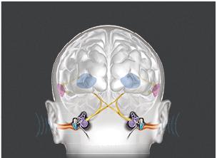 o_webinar_brainhearing