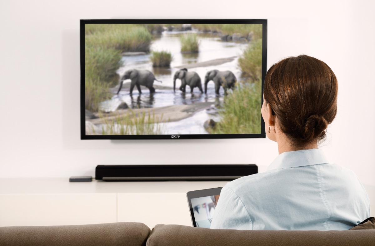 femme regardant la télévision documentaire sur des éléphants